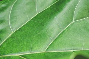 Green Leaf Structure Background Close Up