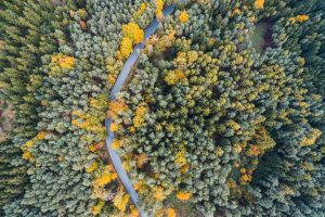 Lonely Road in Woods Aerial From Above